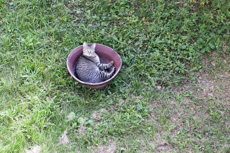 The cat in a flower pot