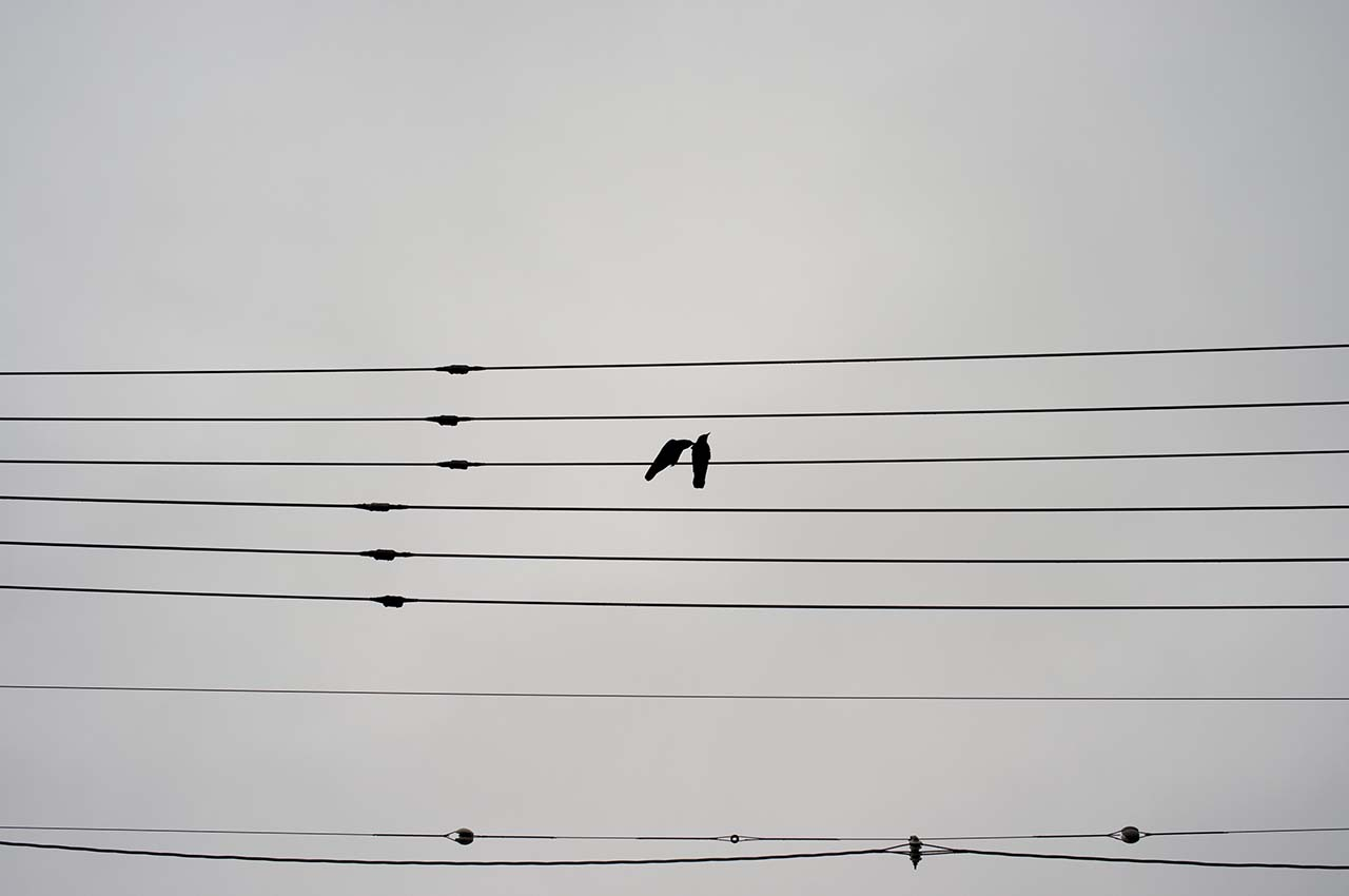 Two crows staying on the wire, Nov. 2020 Nagoya